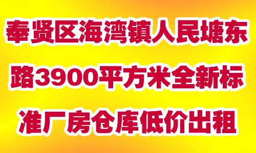 奉贤区海湾镇人民塘东路3900平方米全新标准厂房仓库低价出租