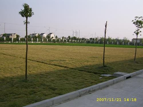长方形空地绿化效果图